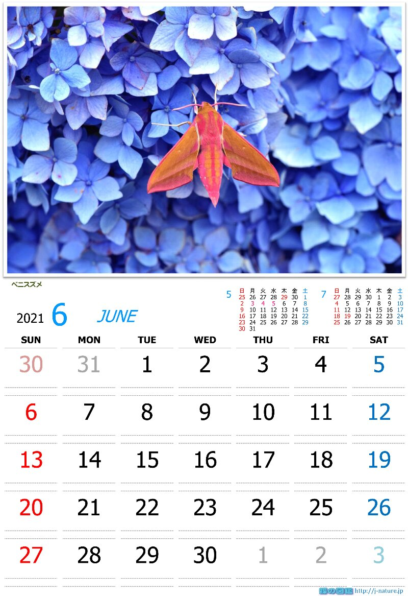 蝶の図鑑 オリジナルカレンダー6月